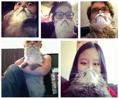 Cat bearding.  And you thought you'd seen every possible stupid Internet photo already...