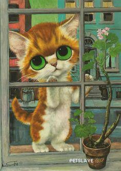 pity kitty