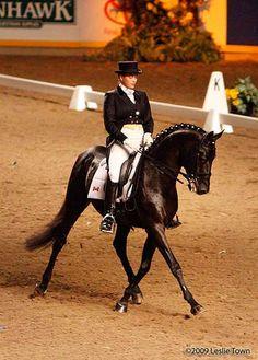 Russian Dressage Horse  www.thewarmbloodhorse.com