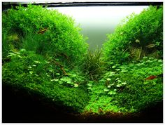 Aquascaping - beniamino aquascaping aquatic plant central