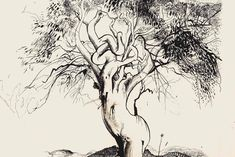 Brett Whiteley: Tree, Tuscany / 'The gum tree at Mangrove Mountain' (detail), Contour Drawing, Line Drawing, Drawing Art, Australian Painting, Australian Artists, Tree Sketches, Art Diary, Sketch Inspiration, Van Gogh