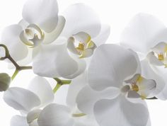 How Is the Color White Used in Feng Shui?: In feng shui, white color is the expression of the Metal feng shui element. White color also adds the energy of purity, freshness and new beginnings to any space.