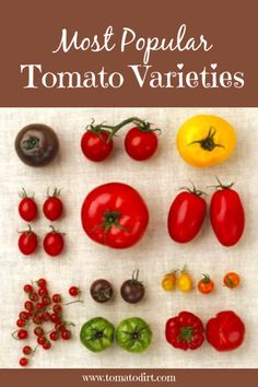 Heirloom tomatoes come in varieties of colors, shapes and sizes. The flavor always excites the taste buds. Better Boy Tomato, Early Girl Tomato, Tomato Garden, Tomato Tomato, Garden Tomatoes, Tomato Plants, Vegetable Garden, Searing Meat, Brazil
