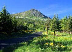Massif du Mézenc 26. Au fond le mont Mézenc. Site naturel classé. Photographie Serge Sautereau (http://serge-sautereau.com)
