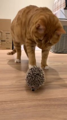 Top 25 Memes of The Week - Cheezburger Users Edition 107 Funny Animal Videos, Funny Animal Pictures, Cute Funny Animals, Cute Baby Animals, Animals And Pets, Cute Cats, Funny Cats, Fun Funny, Wild Animals