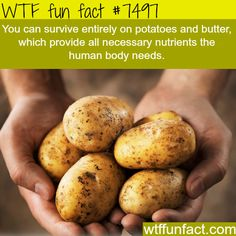 Potatoes provide you with all nutrients your body needs – WTF… (WTF Facts : funny & weird facts) Potatoes provide you with all nutrients your body needs – WTF… Funny Weird Facts, Wtf Fun Facts, Random Facts, Benefits Of Potatoes, Fromage Vegan, Potato Juice, Potato Soup, Potato Diet, Raw Potato