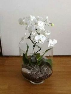 1000 Images About Orchid And Care On Pinterest Vanda