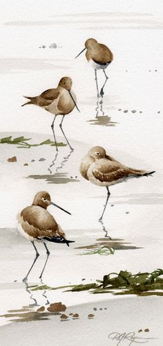 Set of 2 Sand Pipers Art Prints - Watercolor Painting - Signed by Artist DJ Rogers - Wildlife - Wall Decor Watercolor Artists, Watercolor Bird, Watercolor Paintings, Watercolours, Beach Art, Bird Art, Painting & Drawing, Sand Painting, Artist Painting