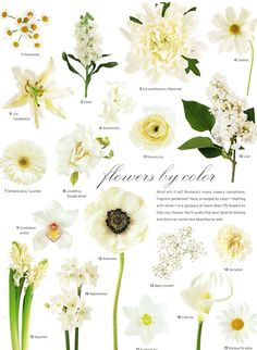 Flowers by color:  1.) Chamomile 2.) Stock 3.) Chrysanthemum, 'Rebonnet' 4.) Cosmos 5.) Lily 'Casablanca' 6.) Stephanotis 7.) Gerbera daisy, 'Lourdes' 8.) Lisianthus, 'Double White' 9.) Ranunculus 10.) Lilac 11.) Cymbidium orchid 12.) Anemone 13.) Baby's breath 14.) Carnation 15.) Hyacinth 16.) Paperwhites 17.) Eucharis lily 18.) Calla lily 19.) Marguerite daisy