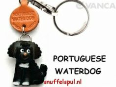 Portugese Waterhond