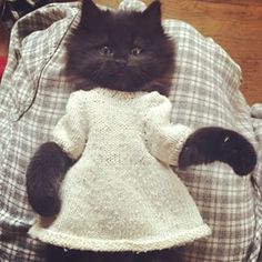 #kitten #with #dress #lady #blackcat #dressedup #cute #doll #dollclothes #adorable #kittensfarm Black Kittens, Doll Clothes, Photo And Video, Dolls, Cats, Animals, Instagram, Baby Dolls, Baby Doll Clothes
