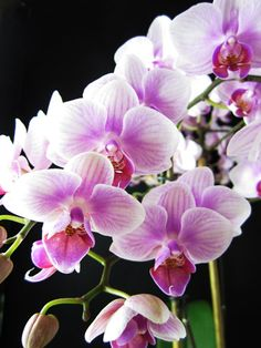 Orchid. So beautiful