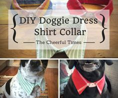 DIY Dog Collar Upcycled Dress Shirt - No Sew