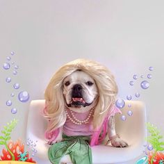 This marvelous mermaid. | 27 Bulldogs That Deserve All Your Candy This Halloween