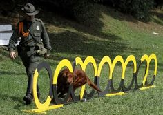 Pin By 恩 劭 On Furry Policemen Pinterest - The internet cant get enough of the taiwan police forces newest k9 recruits