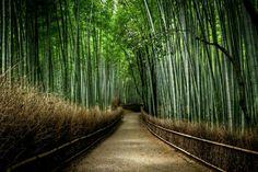 @ el yunke forest