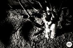 Night Vision.  Birmingham, UK, 2013, Canon EOS 600 D.  #plant #tree #night #shadow #nature #natur #pflanze #blume #baum #beet #nightshot #nightphotography #nacht #blackwhite #blackandwhite #blacknwhite #photography #bnw #bw #black #white #birmingham #uk #england #europe #english #englisch #canon #canoneos600d #travel #travelling #travelphotography #travelphotodiary #travelphotojournalism #landscape #2013