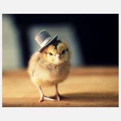 Chick In A Top Hat Print, now featured on Fab.