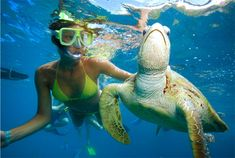 This tour is the most popular for those who want to enjoy the Bali Paradise under water lifes. Morning depart from the hotel and headed east to Blue Lagoon and Tanjung Jepun for your best day snorkeling. Water Life, Blue Lagoon, Snorkeling, Where To Go, Bali, Turtle, Tours, Animals, Diving