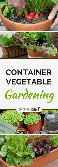 Container vegetable gardens can have higher yields than your average vegetable garden. That�s because the soil is warms up faster aboveground. Find out more... #ContainerGardening