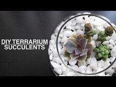DIY : Succulent Plant Terrarium - YouTube