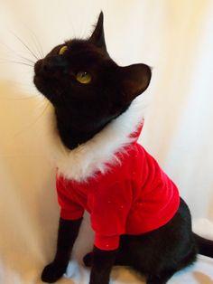 Santa Christmas Cat Hoodie