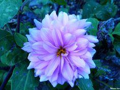 Flower 68 by Mohammad Azam