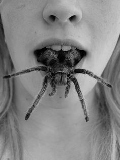 #blackandwhite #female #spider in mouth