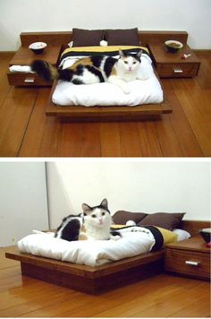 A platform bed for our cats, complete with night stands. Perfect for the crazy cat lover in your life.  #OhlandtVet