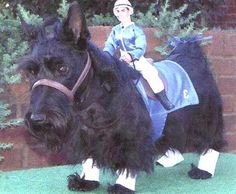 Oh my goodness, Scottie racehorse for Halloween! LOL this is too cute and my Dubh would have a stroke....