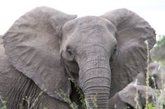 Retire Anna Louise the elephant to an accredited sanctuary.