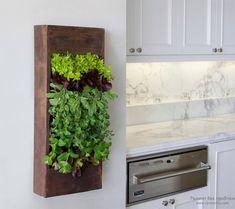 Вертикальное озеленение на кухне из салата и зелени