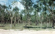 November 27, 1965   An estimated VC Regiment overruns the 7th ARVN Rgt HQ in the Michelin Rubber Plantation northeast of Tay Ninh. Friendly casualties are heavy