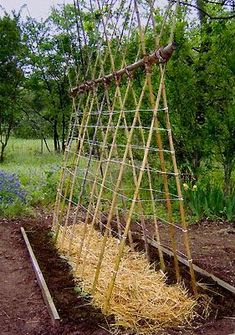Cucumbers and peas trellis....