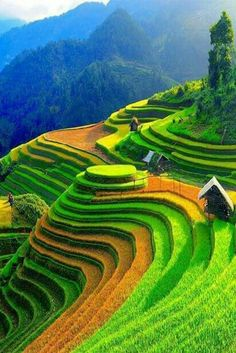 Northern Vietnam is the paradise of stunning and spectacular landscapes. So, you should know the best time to visit Northern Vietnam to enjoy their utmost beauty. Visit Vietnam, Vietnam Travel, Sapa Vietnam, Vietnam Tours, North Vietnam, Laos, Places To Travel, Places To See, Tourist Places