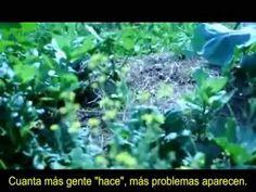 Agricultura Natural: La Historia de una Huerta - YouTube