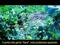 #PERMACULTURE ~ Agricultura Natural: La Historia de una Huerta - Un film de Mihail Kossev https://www.youtube.com/watch?v=CwvclsL_lCI MIHAIL KOSSEV http://mihailkossev.weebly.com/films.html DOUGLAS BOICE https://www.airbnb.cl/users/show/5197919 #PERMACULTURA HUERTO URBANO, GRANJA ORGANICA