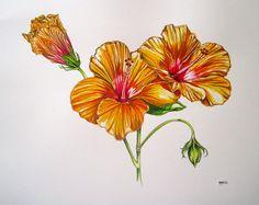 Summer Hibiscus - Pip Boydell