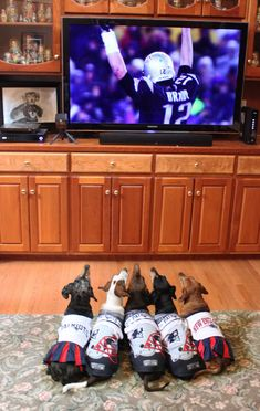 November's Best PETriot of the Month Submissions presented by Bob's Discount Furniture New England Patriots Dachshund Love, Daschund, Hot Dogs, New England Patriots Football, Nfl, Weenie Dogs, Cute Animals, Baby Animals, Funny Animal Pictures