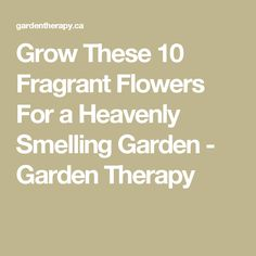 Grow These 10 Fragrant Flowers For a Heavenly Smelling Garden - Garden Therapy