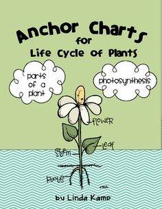 These anchor charts are part of my Life Cycle of Plants: 20 Activities