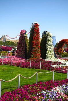 #Miracle Garden #Dubai
