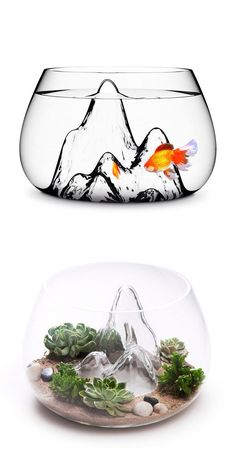Not a humane size for that poor goldfish, but it definitely makes for a cute succulent terrarium.