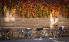 """Top 20: """"Fahrrad"""" von Anna Franke"""