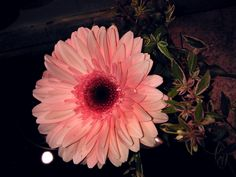 https://flic.kr/p/i3knXC | GERBERA in the night | SOOC Geburtstagsblume, zwei Sträusschen,  von Andrea und Fabio mit je einer Gerbera  -->> Click , click   ©  View LARGE on BLACK or white, or grey __  For your Eyes only ©   ♥ Exif data  Taken on November 23, 2013 at 8.43PM  Flash On, Fired   Camera  Smartphone Nokia 800 Settings: 1/439 ƒ/2.2  presets  macro  ISO 100