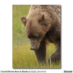Coastal Brown Bear in Alaska Postcard  #brown #bear, #coastal, #alaska, #wildlife, #nature, #wild, #grass, #wilderness, #usa, #america #postcard