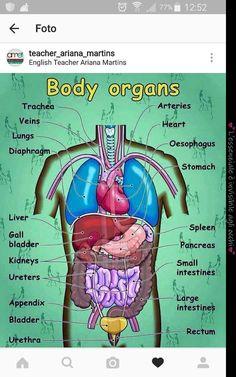 Body #salud #dietavegetarianaadelgazar