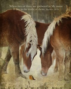 Bible Verses for Horse Lovers Inspirational Horse Quotes, Inspirational Prayers, Horse Background, Horse Riding Quotes, Cowboy Quotes, Country Girl Quotes, Light Of The World, Draft Horses, Favorite Bible Verses