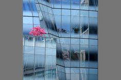 Image du Jour Chasseur d'Images : Pokina à New York !