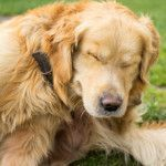 Fleas, Seasonal Allergies, or Food Allergies? How to Tell Them Apart in Your Pet & How to Treat Them!